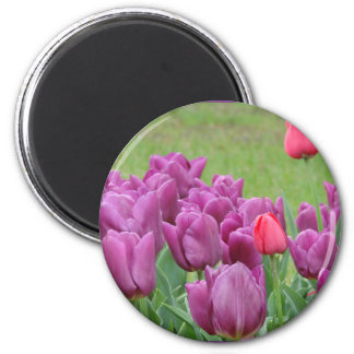 Purple Tulips Flowers Beautiful Blooms 2 Inch Round Magnet