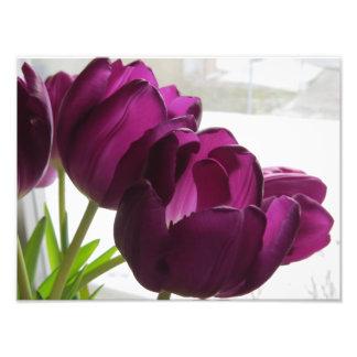 Purple Tulips With Snowy Backround Photo Print