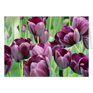 Purple Tullips Card