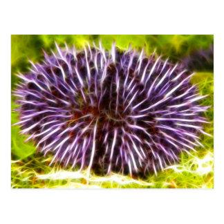 Purple Urchin Postcard