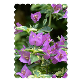 Purple Variegated Crepe and Myrtle Announcements