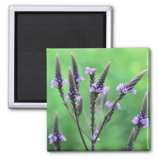 Purple Vervain Wildflower Flower Photo Magnet