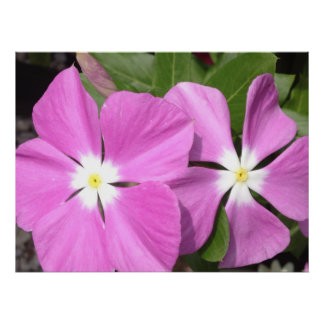 Purple Vinca Flowers Poster