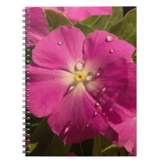 Purple Vinca with Raindrops notebook