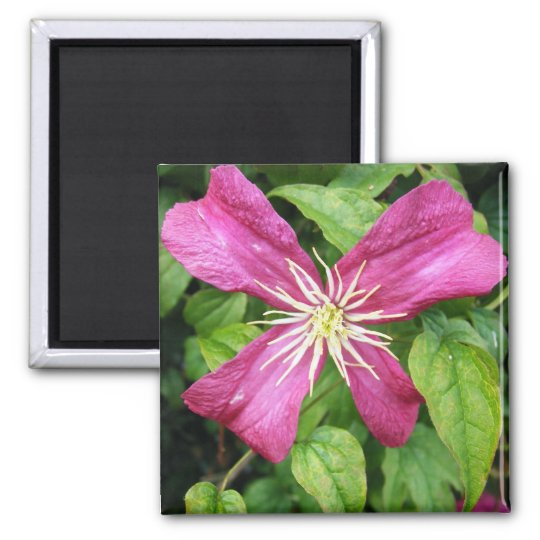 Purple Vine Flower Magnet