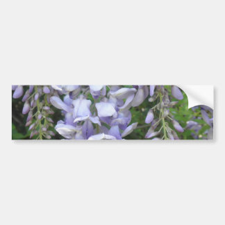 Purple Vine Wisteria Flowers Wildflowers Photo Bumper Sticker