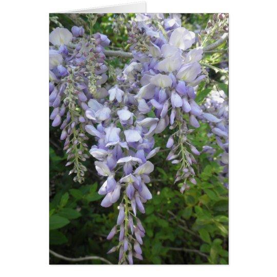 Purple Vine Wisteria Flowers Wildflowers Photo Card