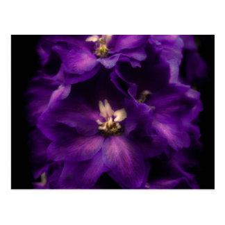 Purple Vintage Delphinium Postcards