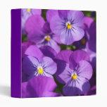 Purple Viola Binders