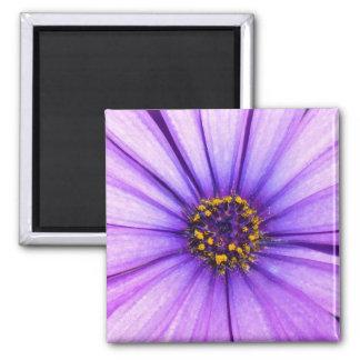 Purple Violet Daisy Flower Macro 2 Inch Square Magnet
