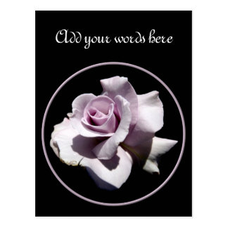 Purple - Violet Rose Postcard