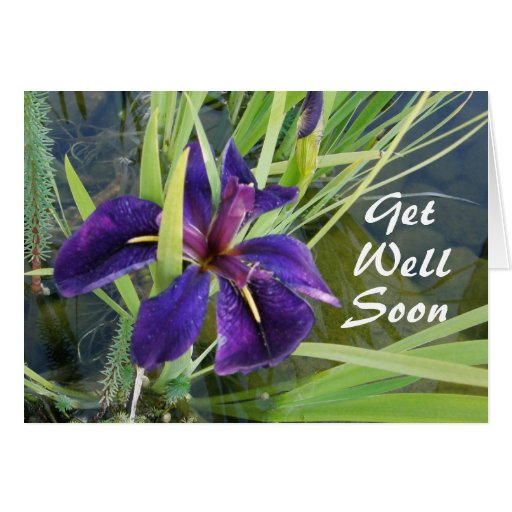 Purple Water Iris Card