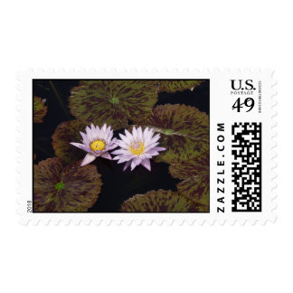 Purple Water Lilies Stamps