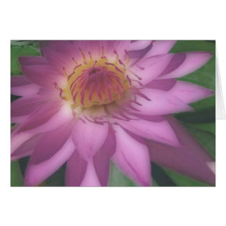 Purple-Water-Lilly Card