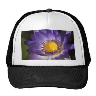 Purple Water Lilly Trucker Hat