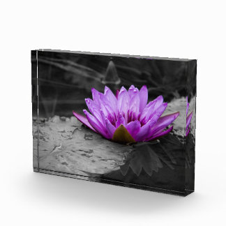 Purple Water Lily 002 Black and White Background Award