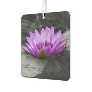 Purple Water Lily 002 Black and White Background Car Air Freshener