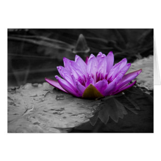 Purple Water Lily 002 Black and White Background Card