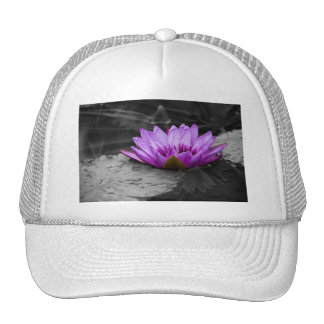 Purple Water Lily 002 Black and White Background Hats
