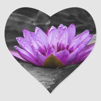 Purple Water Lily 002 Black and White Background Heart Sticker