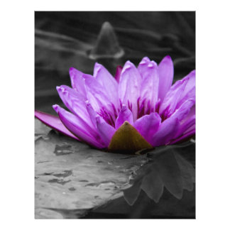 Purple Water Lily 002 Black and White Background Letterhead Template