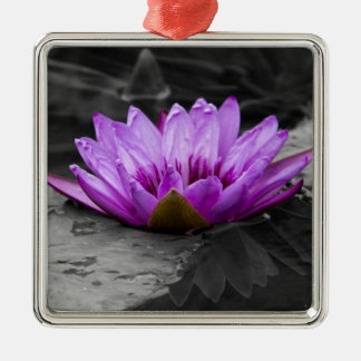 Purple Water Lily 002 Black and White Background Metal Ornament