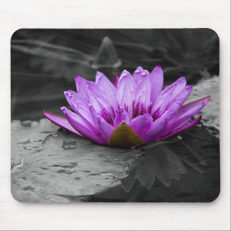 Purple Water Lily 002 Black and White Background Mouse Pads