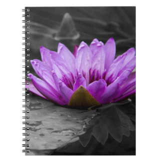 Purple Water Lily 002 Black and White Background Notebooks