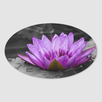 Purple Water Lily 002 Black and White Background Oval Sticker