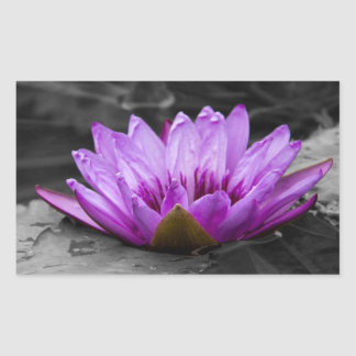 Purple Water Lily 002 Black and White Background Rectangular Sticker