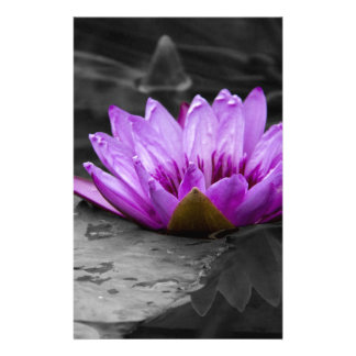 Purple Water Lily 002 Black and White Background Stationery Paper