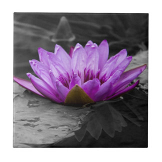 Purple Water Lily 002 Black and White Background Tile