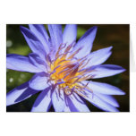 Purple Water Lily Card
