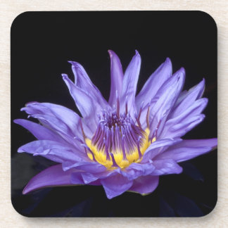 Purple Water Lily Coaster