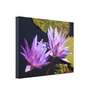 Purple Water Lily Duet Gallery Wrap Canvas