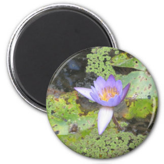 Purple Water Lily Magnet