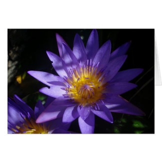 Purple Water Lily Note Card