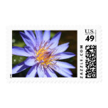 Purple Water Lily Postage Stamp