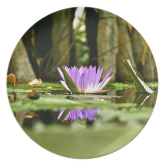 PURPLE WATER LILY REFLECTING IN A POND DINNER PLATE