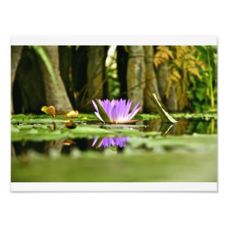 PURPLE WATER LILY REFLECTING IN A POND PHOTO ART