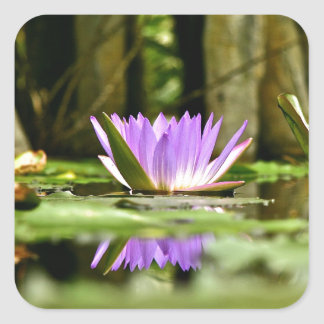 PURPLE WATER LILY REFLECTING IN A POND STICKERS