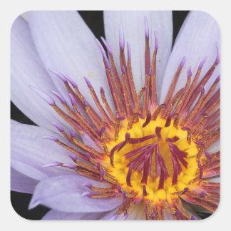 Purple Water Lily Square Sticker