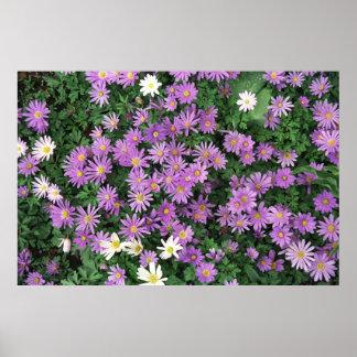 Purple Waterlilies Poster