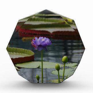Purple Waterlily Award