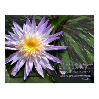 Purple Waterlily Buddha Quote Postcard