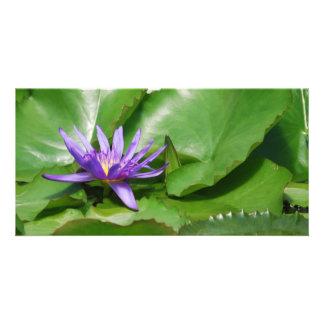 Purple Waterlily Card