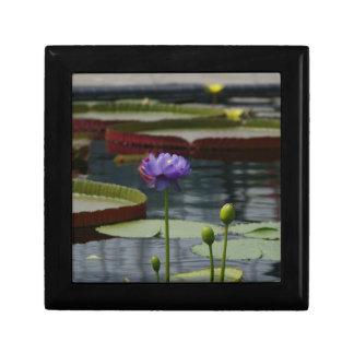 Purple Waterlily Gift Box