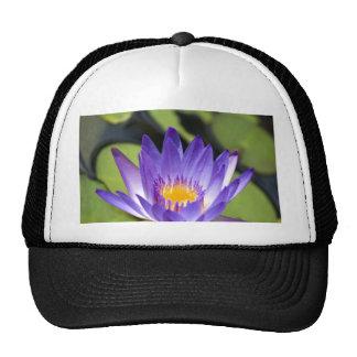 Purple Waterlily Mesh Hat
