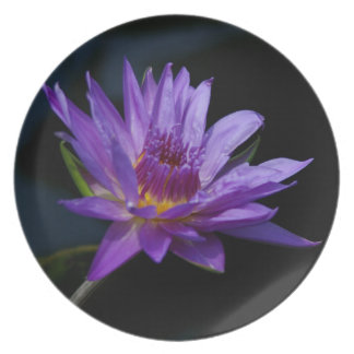Purple Waterlily Lotus Melamine Plate