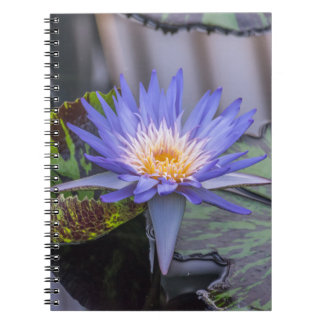 Purple waterlily notebook